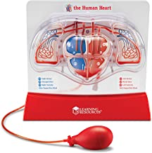 Learning Resources Pumping Heart Model, Teaching Aid, Classroom Multi-Sensory Demonstration Set, Ages 8+