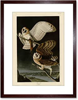 The Art Stop Painting Book Page Birds America Audubon BARN OWL Framed Print F97X4481