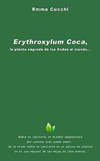 Erythroxylum Coca, la planta sagrada de los Andes al mundo...