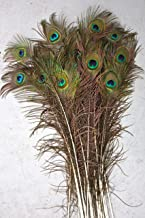 Best where to get peacock feathers Reviews