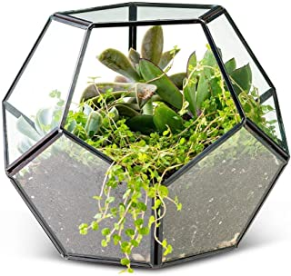 Ryhn Geometric Terrarium Container, Terrarium Planter, Dodecahedron, Glass Greenhouse, Wedding Decor Home Office Decor