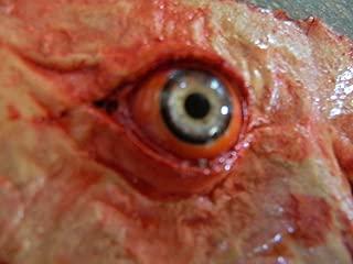 Dead Head Props Halloween Prop Cut Off face Eyes of Fear