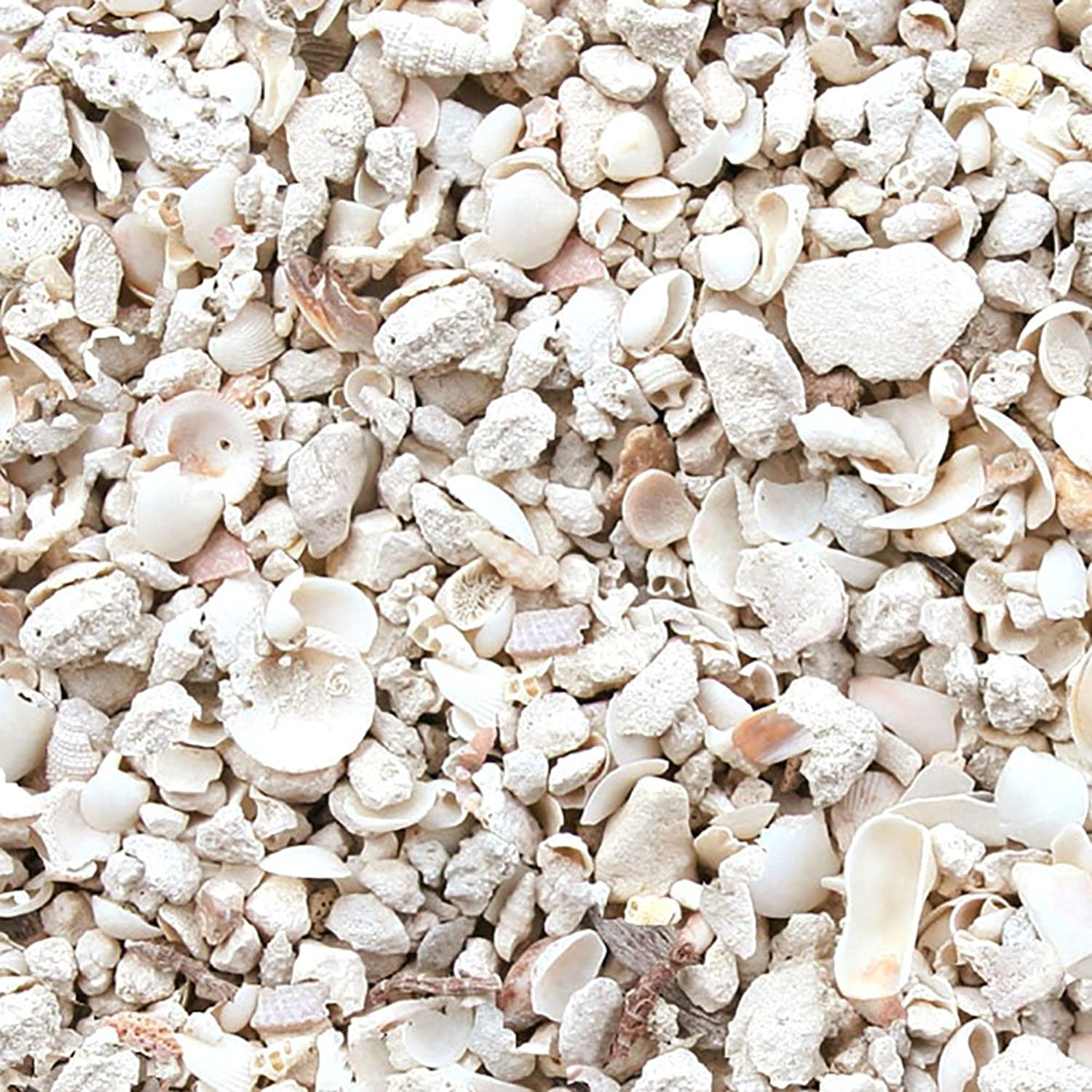 Safe & NonToxic {Standard Size, 0.33  to 0.5 Inch} 20 Pound Bag of Gravel, Rocks & Pebbles Decor Made of Genuine Coral for Freshwater & Saltwater Aquarium w  Unique Beneficial Seashell Style [Tan]