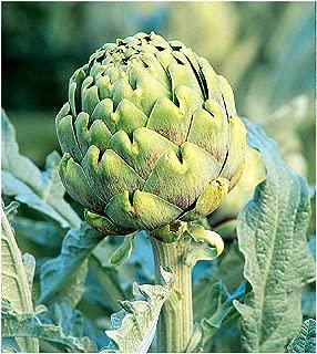 Best artichoke plants for sale Reviews