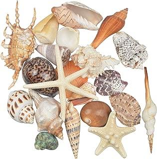 Jangostor 21 PCS Medium Sea Shells Mixed Ocean Beach Seashells,Various Sizes Natural Colorful Seashells Starfish Perfect for Beach Theme Party Home Decorations,DIY Crafts, Fish Tank