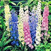 Seeds Rare Delphinium High Tall Mix Giant Flower Annual Outdoor Cut Ukraine for Planting