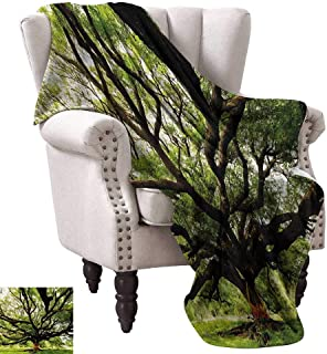 WinfreyDecor Nature Reversible Blanket The Largest Monkey Pod Tree in Thailand Eastern Green Big Branches Growth Eco Photo Ultra Soft and Warm Hypoallergenic 60