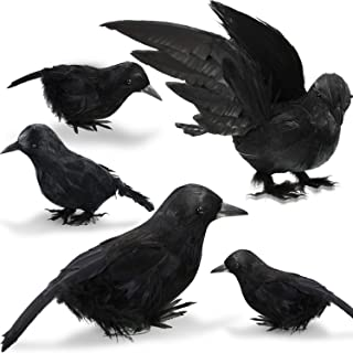 Best black crows corvus Reviews