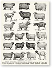 Breeds of Sheep Vintage Poster Prints Farmhouse Wall Art Types of Sheep Canvas Painting Cottage Ranch Farming Decor Farmer Gifts,20X25 cm No Frame,Ph2608
