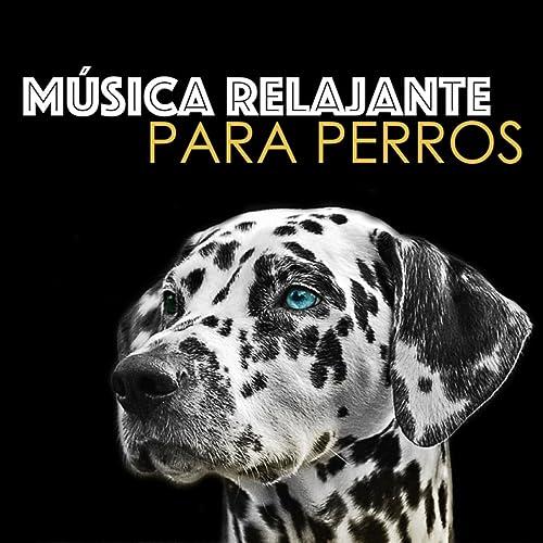 Música Relajante para Perros - Musicoterapia para Perro, Gato y Mascotas