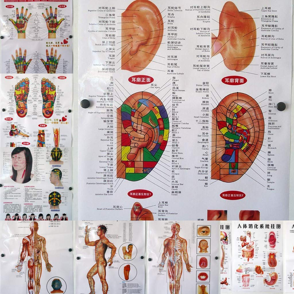 ZHONGJIUYUAN 10 Stlyes Body Complete Free Shipping Systems for Set 70% OFF Outlet TCM Chart Health-Cul