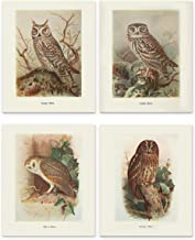 pictures of owls to print and color