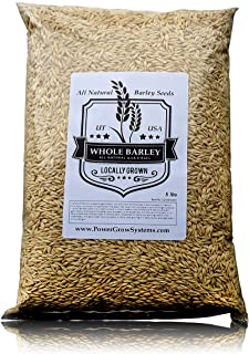 Barley Seeds - All Natural 5 Pounds Whole Barley Seed for Juicing, Malt Brewing, Beer Making