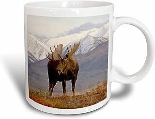 3dRose mug_87701_1 Moose Bull Wildlife, Denali National Park, Alaska Us02 Ska3065 Steve Kazlowski Ceramic Mug, 11-Ounce
