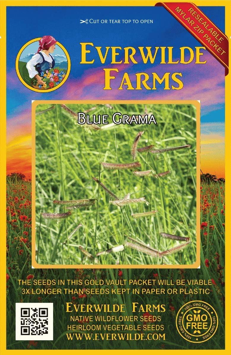 Everwilde All items in the store Farms - 1000 Blue Grama Vaul Native Gold Grass Sacramento Mall Seeds