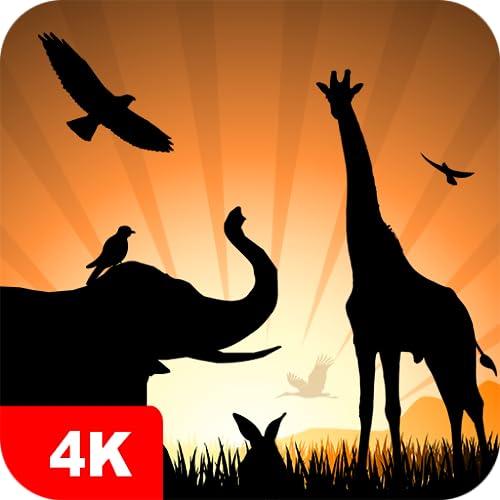 Papéis de parede com animais 4K