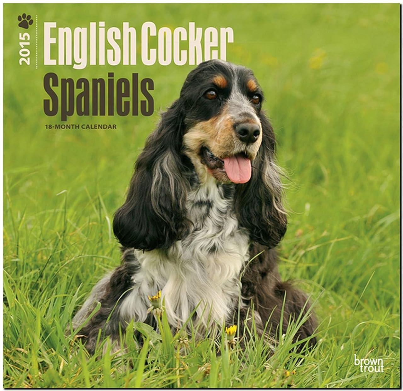 前提おじいちゃんアリEnglish Cocker Spaniels 2015 18 Month Calendar