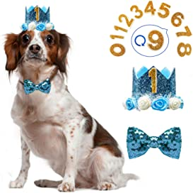 Explore birthday hats for dogs