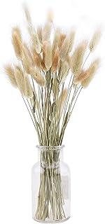 Lot de 50 grandes fleurs de lagurus séchées naturelles ovatus séchées pour arrangements floraux pour mariage, décoration ...