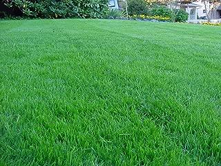 Kentucky Bluegrass Lawn Grass Seed, 1 Pound