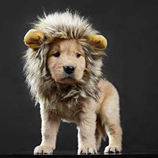 Best french bulldog lion costume Reviews