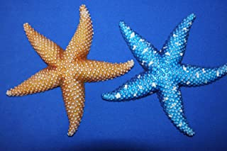 Salty Pelican Ocean Theme Kids Room Decor Colorful Sea Stars Starfish Wall Plaques Three-Dimensional Front Poly Resin, 6 1/4