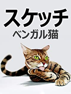 ビデオクリップ: スケッチ ベンガル猫