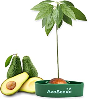 AvoSeedo Avocado Tree Growing Kit – Practical Gardening Gifts for Women, Mom, Sister & Best Friend /Grow Avocado Plant Indoor with Unusual Pit Grower Boat /Kitchen Garden Seed Starter Gift