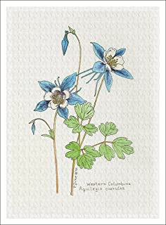 Arthouse Botanical Illustration of Columbine from The Wildflowers Group, Giclee Print, 7 X 9.5 Inches
