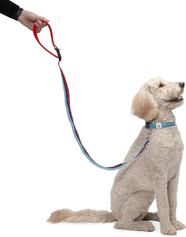 Sicherheitsgurt-Clip und mehr Zubeh/ör f/ür aktive Hunde Furhaven Pet Gr/ö/ßen und Farben LED-Hundehalsband mehrere Stile Freih/ändige Bungee-Hundeleine