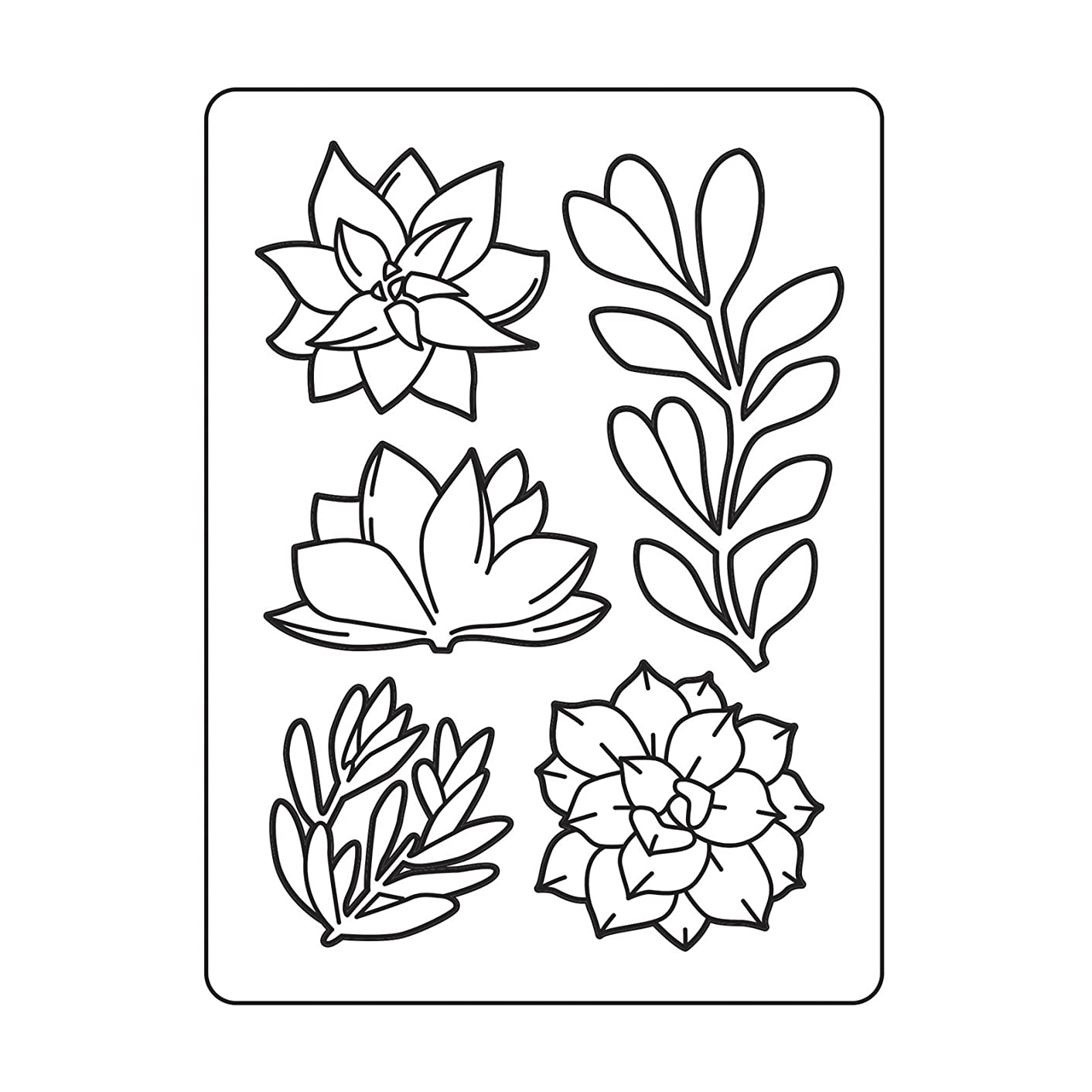 DARICE 30023122 Embossing Folders: Assorted Succulents, Multicolor