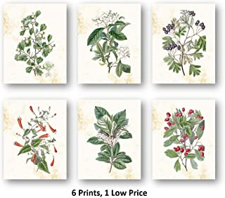 Ramini Brands Botanical Flowers Plants Artwork - Living Room Bedroom Decor Prints - Set of 6 8 x 10 Unframed Prints - Great Gift for The Home or Office