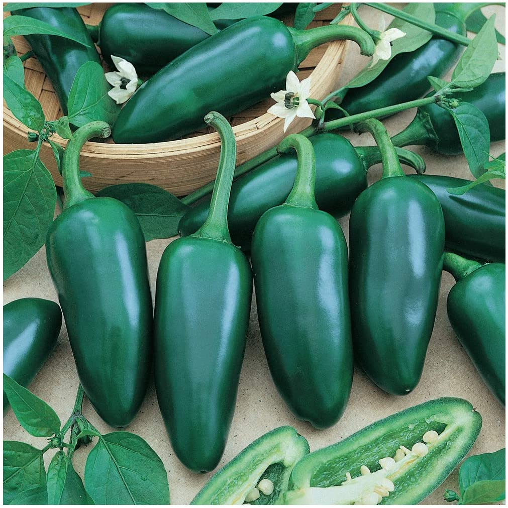 Selling rankings Everwilde Farms - 1 Lb Jalapeno Vault Hot Pepper trend rank Gold Seeds