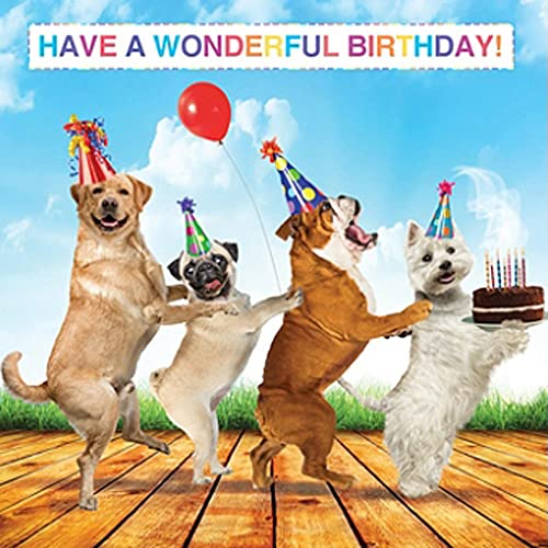 Dog Birthday Cards Amazoncouk