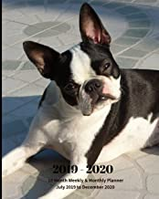 2019 - 2020 | 18 Month Weekly & Monthly Planner July 2019 to December 2020: Boston Terrier Dog Breed Pets Animal Vol 66 Monthly Calendar with U.S./UK/ ... Holidays– Calendar in Review/Notes 8 x 10 in.