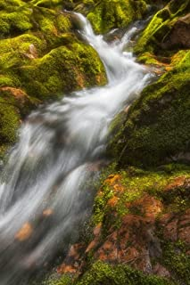 A brilliant spring sun highlights the tumbling white water and lush green mosses on Big Brook Kellys Mountain Cape Breton ...