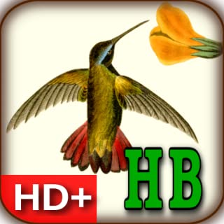 audubon wallpaper