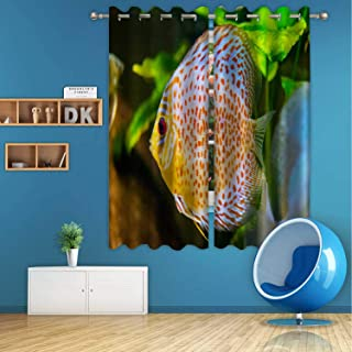 ALUONI Discus Fish in Aquarium Digital Art Print Polyester Window Curtains,126836 for Bedroom,72 in Wide x 63 in high