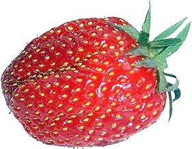 Riesen Erdbeere ca 50 Samen Größte Erdbeere der Welt Erdbeersamen