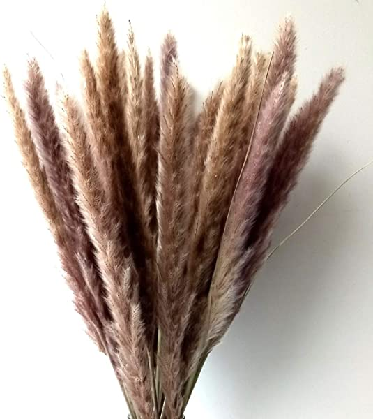 Dongliflower 60 Pcs Natural Small Pampas Grass Dried Reed Plumes Phragmites Communis Wedding Decorative Flower Bunch 24 Tall Natural