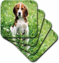 3dRose cst_55198_1 For Love of a Beagle Soft Coasters, Set of 4