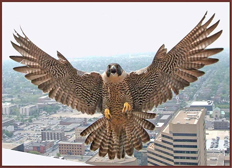 Peregrine Hawk Landing On Tall Building Etched Vinyl Stained Glass Film Static Cling Window Decal