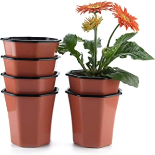 fresh flower pots