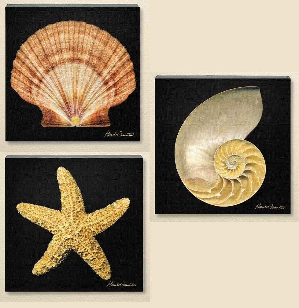 In stock 3pc 10x10 Feinstain Canvas Wall Nautilus Art Picture Scallop She price