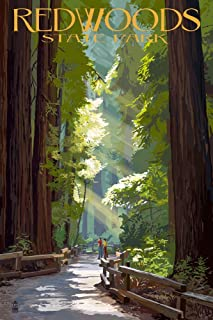 Redwoods Park, California – Pathway in Trees (12×18 Art Print, Wall Decor Travel Poster)