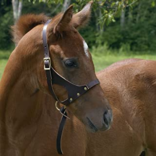 Perri's Grow with Me Leather Foal Halter, Havana, One Size