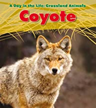 Coyote (A Day in the Life: Grassland Animals)