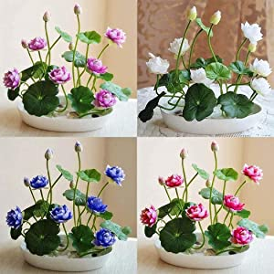 Bonsai Lotus Flower Seeds for Planting 32PCS Water Lily Plant Seeds Aquatic Plants Home Decor