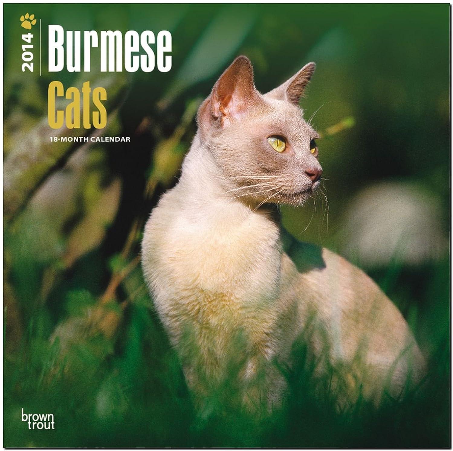 ウィザード鑑定裁量Burmese Cats 2014 Calendar