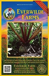 Everwilde Farms - 500 Sugar Beet Beet Seeds - Gold Vault Jumbo Seed Packet